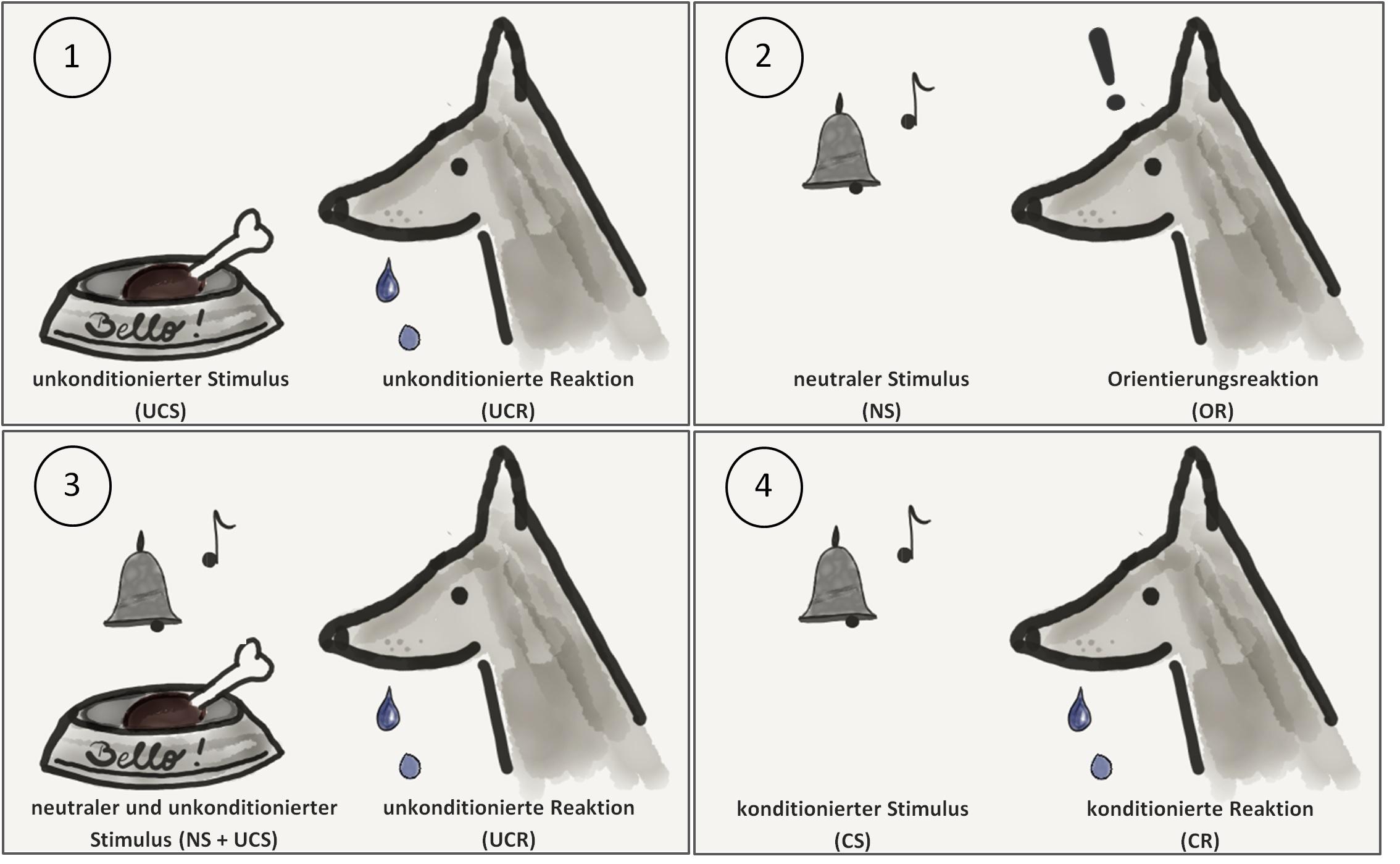 Klassische Konditionierung Pawlowscher Hund 12