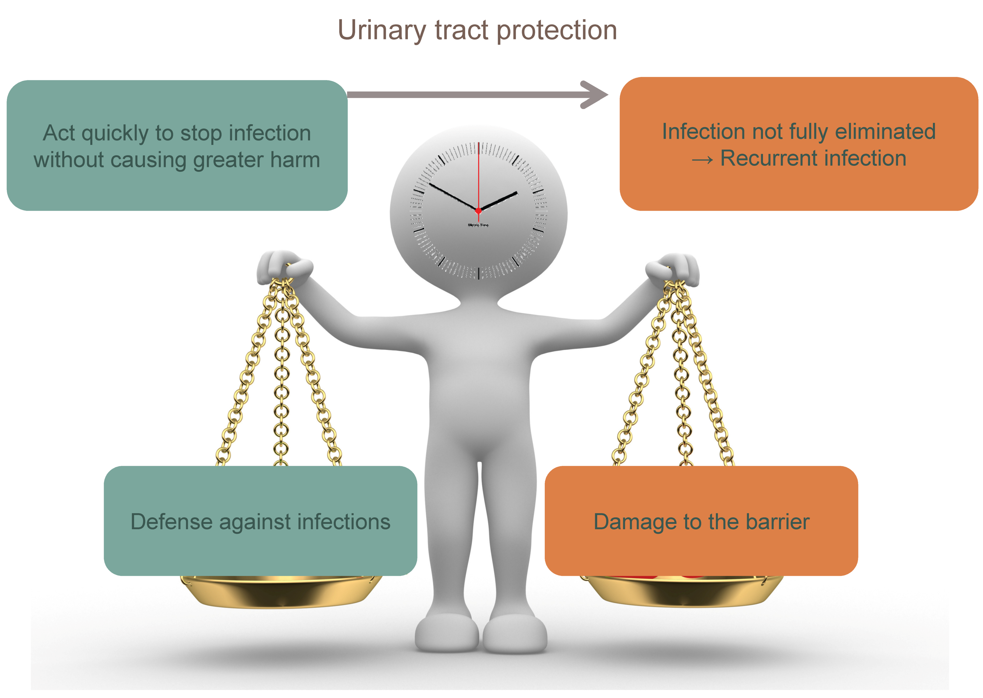 Figure 3: To obtain an adequate urinary tract protection, the immune system must act quickly to stop uropathogen invasion without causing greater harm. If this response is curtailed too soon in order to prevent more damage, infection could not be fully eliminated leading to recurrent infections.