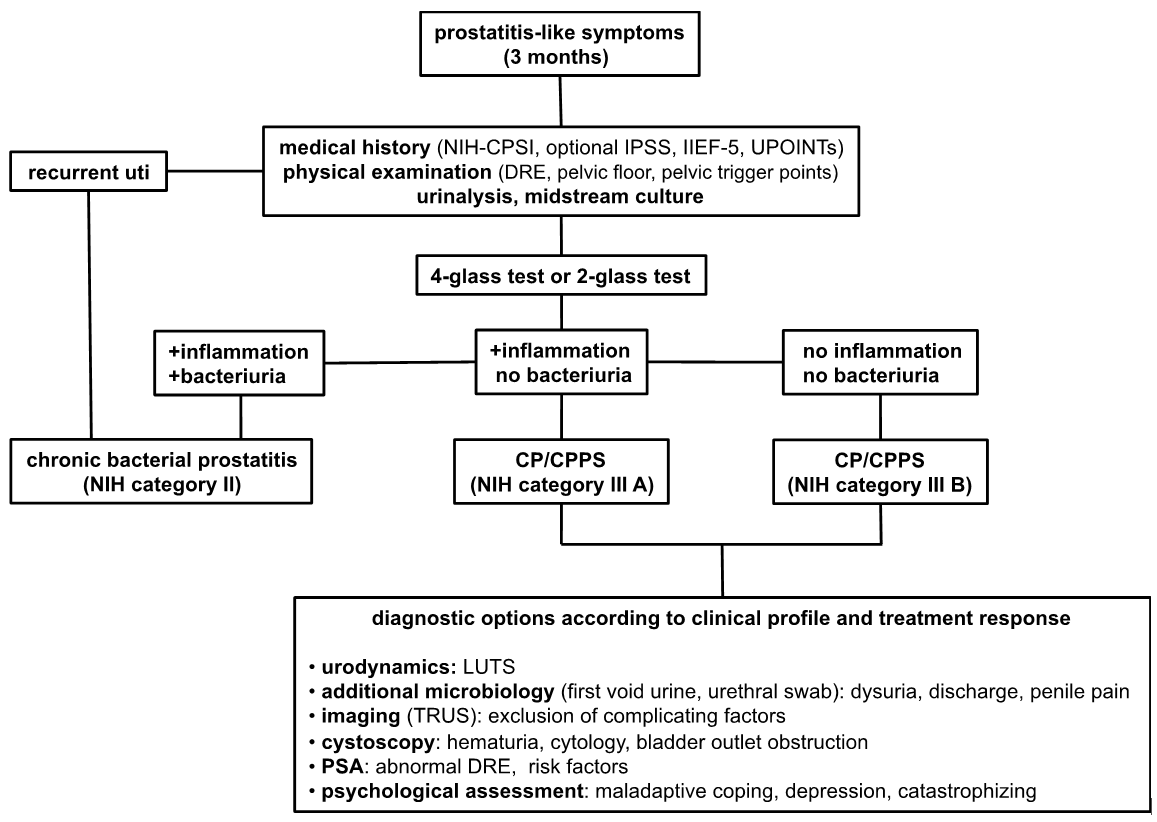 Figure 2: Diagnostic algorithm for patients suggestive of CP/CPPS (adapted with permission from Elsevier).